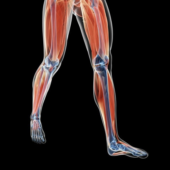 Improvements in Muscle Strength May Reduce Disability in SLE