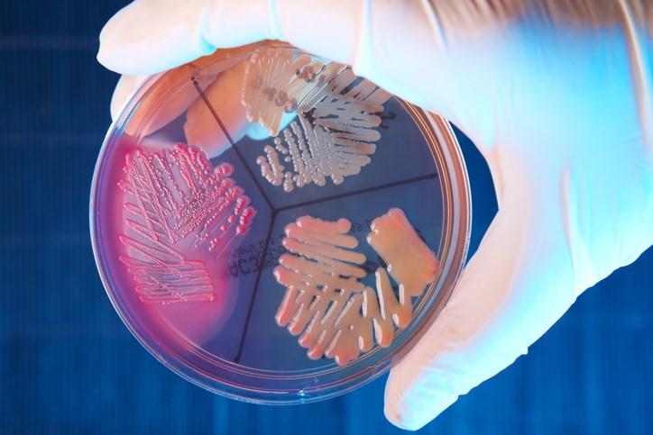 SEM image depicting numerous clumps of methicillin-resistant <i>Staphylococcus aureus</i> bacteria. <i>Photo Credit: CDC/ Jeff Hageman, MHS.</i>