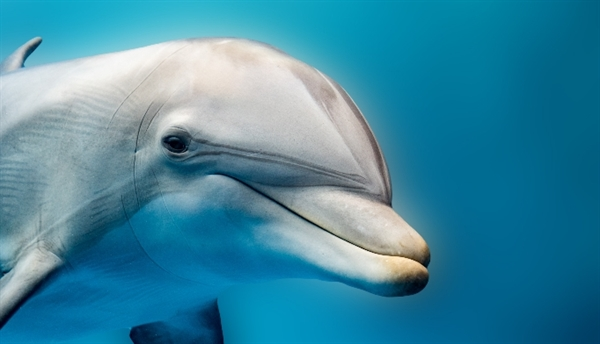 W56.02XD: Struck by dolphin, subsequent encounter