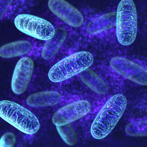 Researchers Examine Potential Key to Future Lupus Treatments