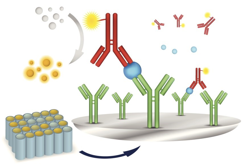 Prognostic Utility of Antibodies to Adalimumab in RA, AS, and PsA