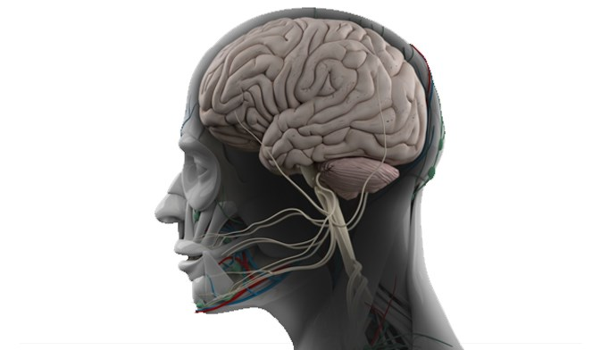 SLE Disease Activity and Detectable Focal Changes in Cerebral Volume