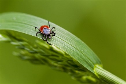 Examining Developments in Tick-Borne, Lyme Disease Testing