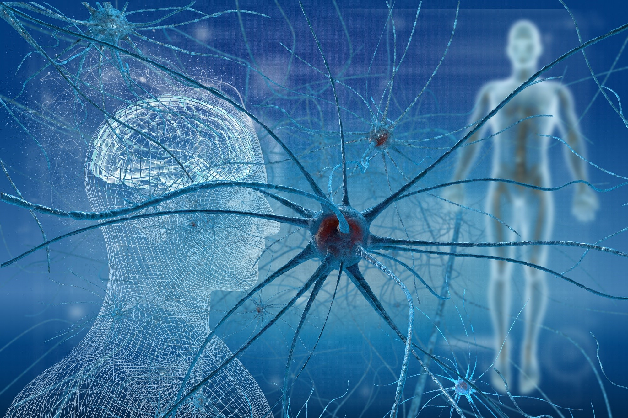 Neurogenic inflammation is a key mechanism contributing to many of the clinical features of fibromyalgia.